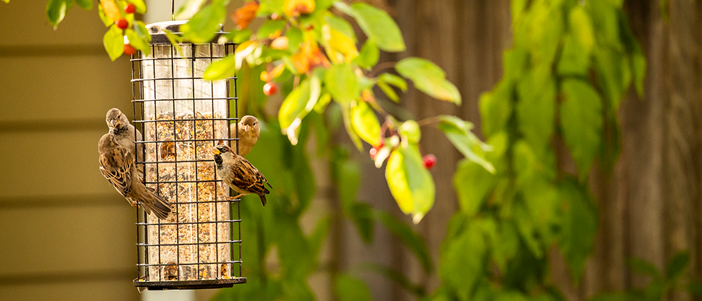 Image of bird in a bird feeder