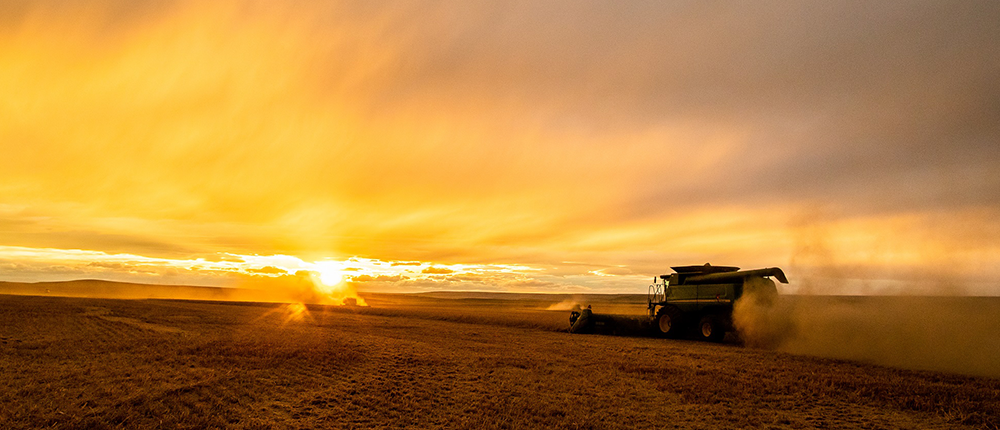 Image of a combine harvester at sunset harvesting grain.