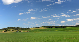 Farm and ranch insurance, green, blue, field, landscape, farm, ranch, insurance, Skye, 320x170, trees, crops, farming,